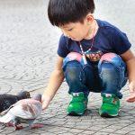 Pourquoi voyons-nous rarement un bébé pigeon en ville et à quoi ressemble-t-il?